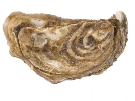 """Auster ©""""Deutsche See"""" Fischmanufaktur"""